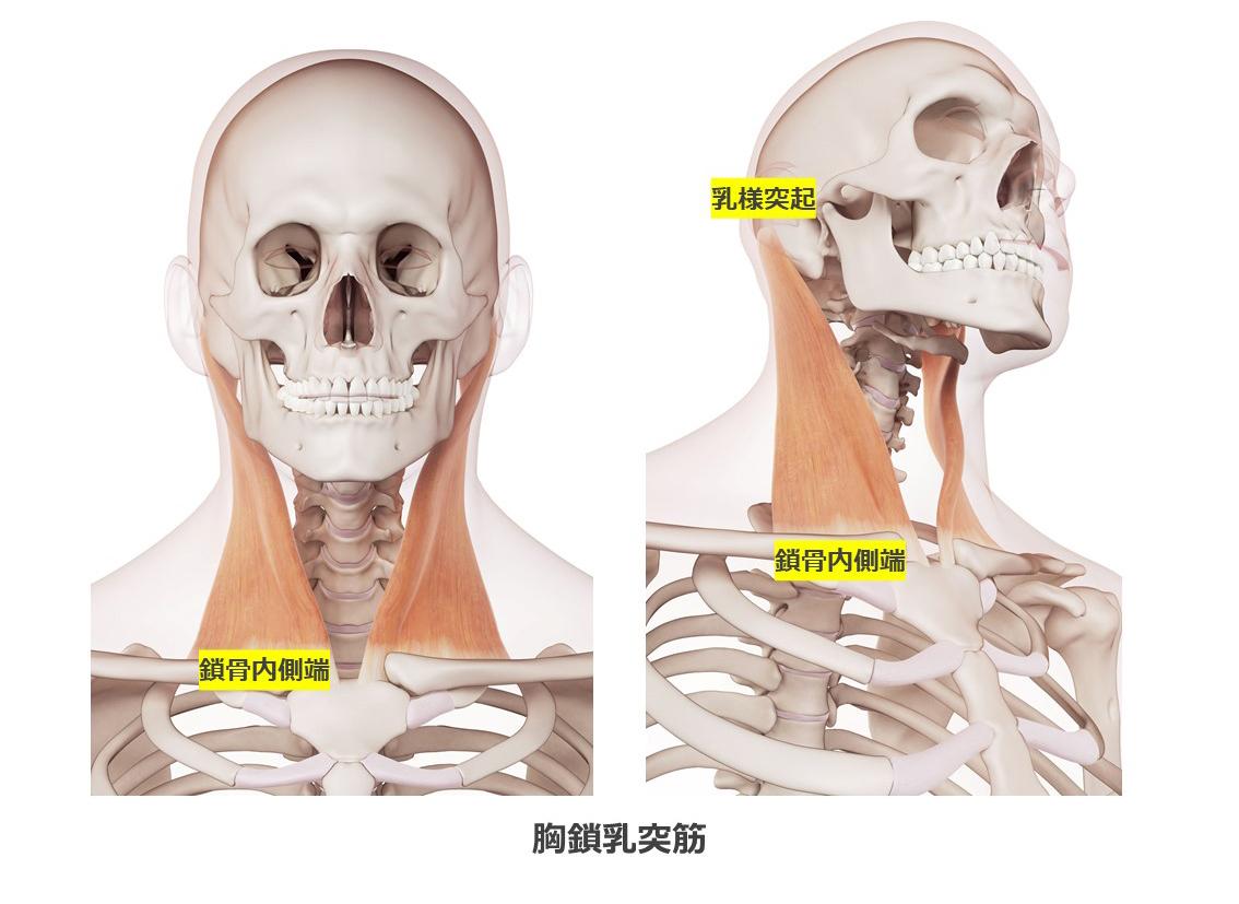 胸鎖乳突筋