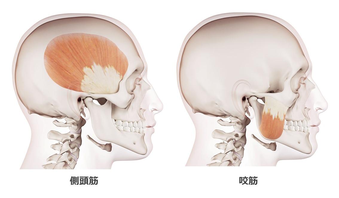 側頭筋と咬筋