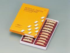 レジン歯 前歯