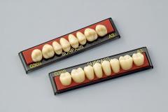 サーパス臼歯Gシリーズ