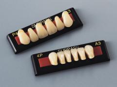 サーパス 前歯P形態