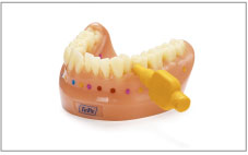 デンタルモデル/Dental Model