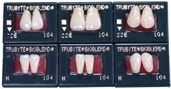 バイオブレンド陶歯