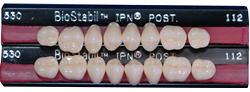バイオスタビルIPN硬質レジン臼歯