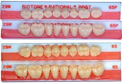 バイオフォームレジン臼歯