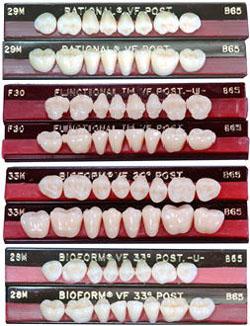 バイオフォーム陶歯臼歯