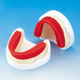 ベースプレート咬合堤つき石こう製無歯顎模型 [ND-N8]