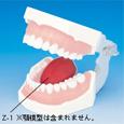 舌模型 [Z-1]