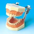 複製歯牙着脱模型 [i2D-400C]