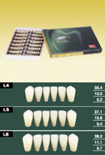 イーハ6 前歯下顎 6歯×16