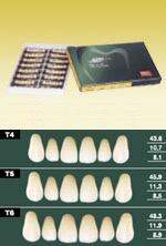 イーハ6 前歯上顎 6歯×16
