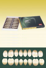 イーハ8 単冠臼歯 8歯×12