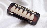 レイニング人工歯